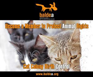 Baldea 300x250 10 02 2020