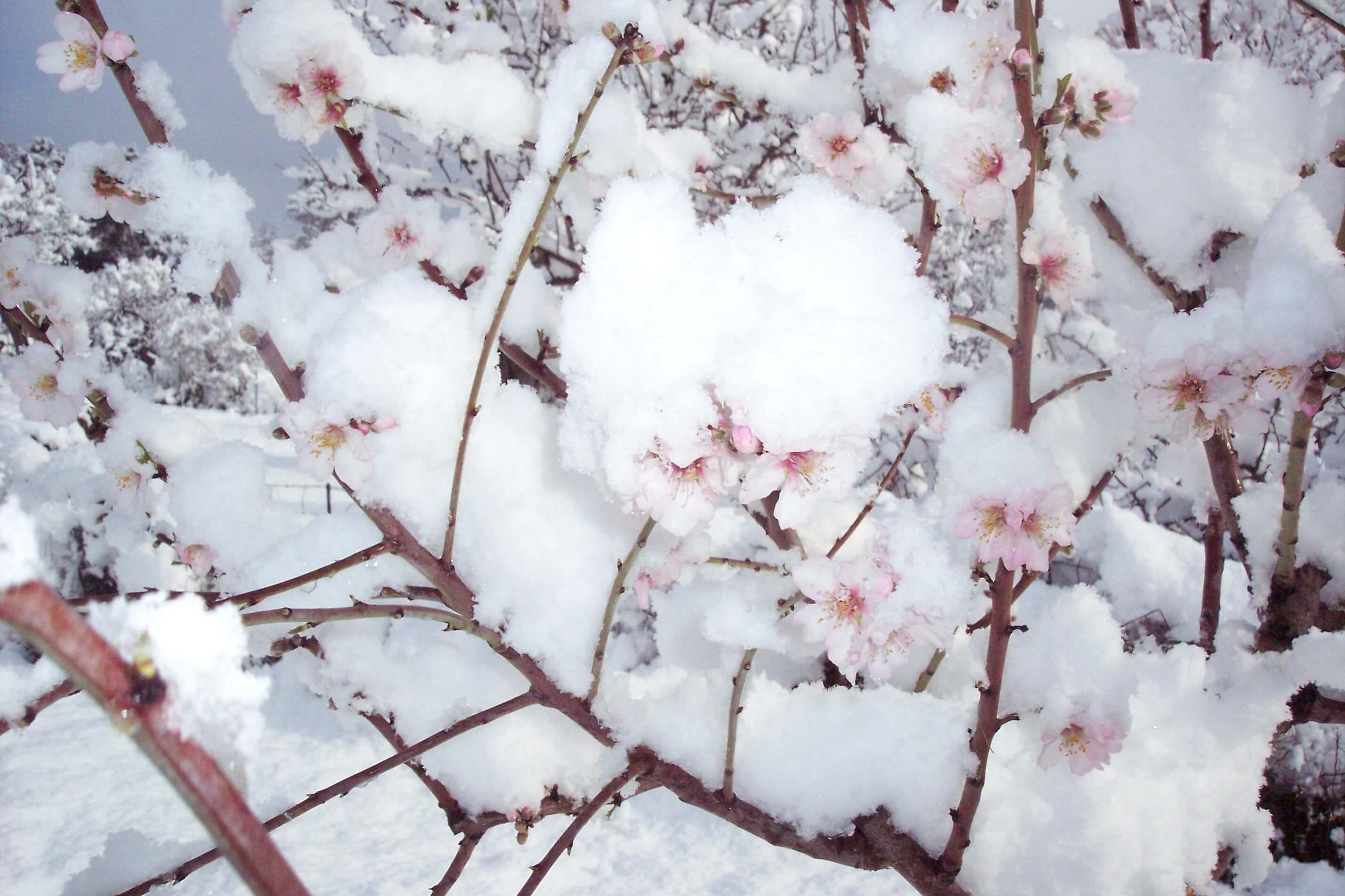 Snow Mallorca 7