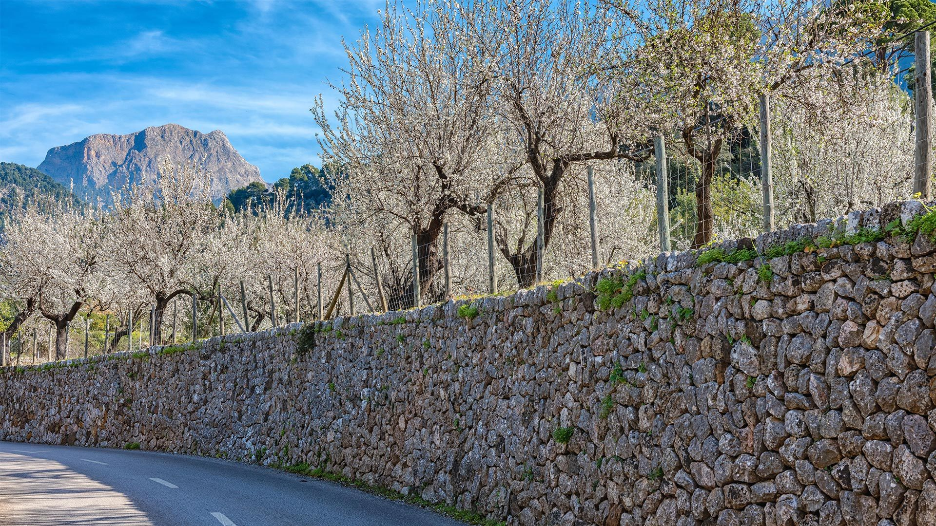 Almond Blossom Photo Contest Mallorca Gary Lloys Rees min