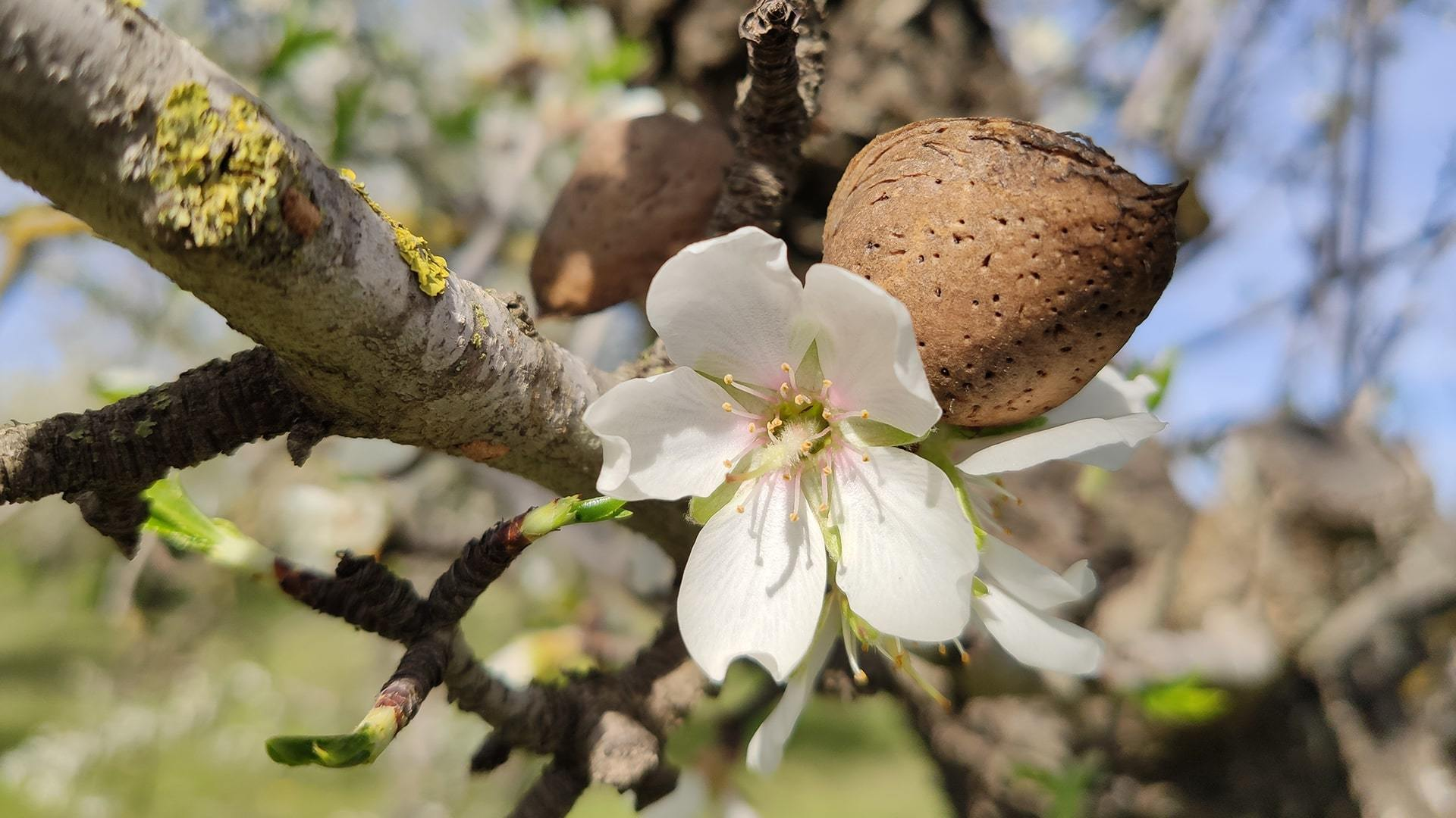 Almond Blossom Photo Contest Mallorca Janka Szoke min