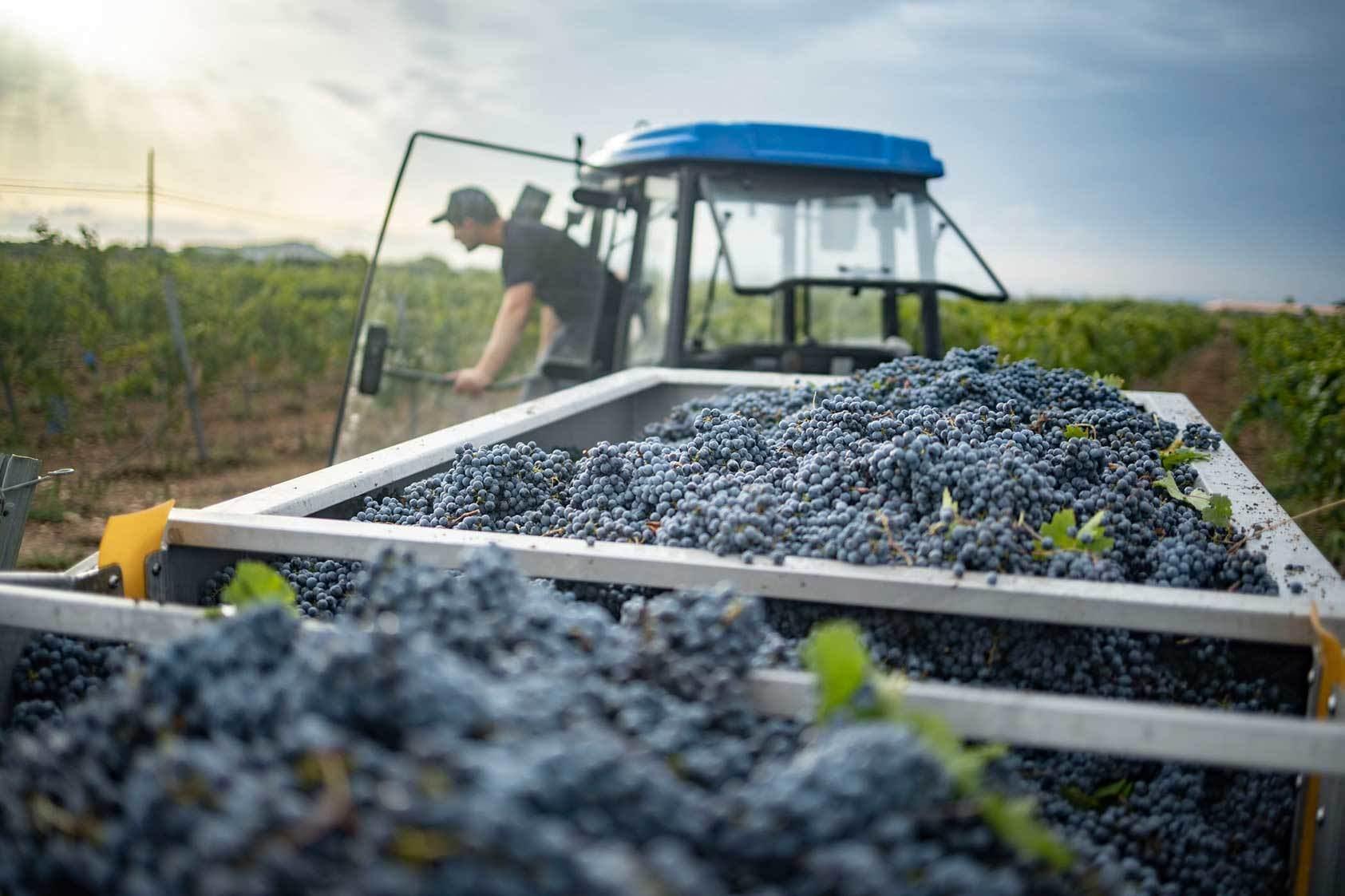 Blanca Terra Mallorca Majorca Wine Quality Original Qualitaet Original Wein Rotwein Weisswein Vino Calidad