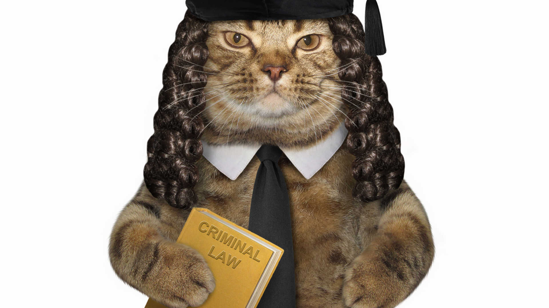 Cat judge