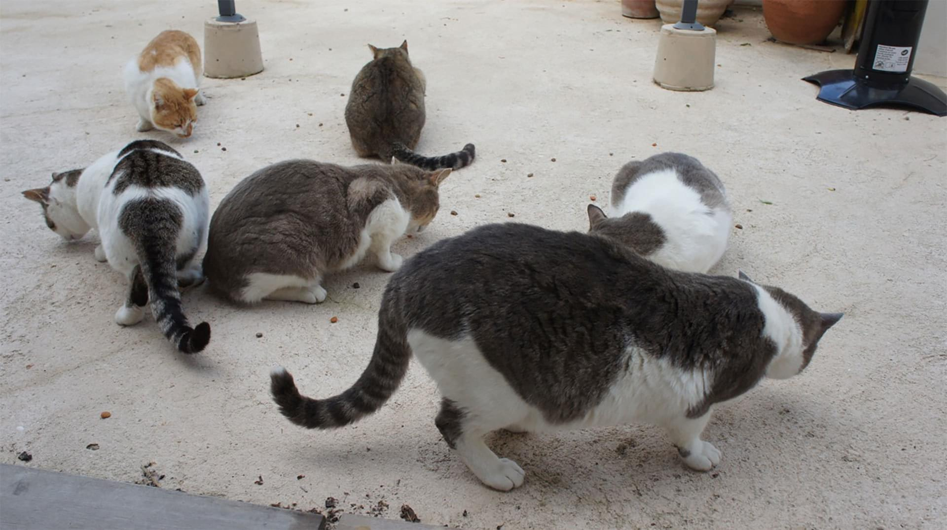Cats Feeding Outdoor