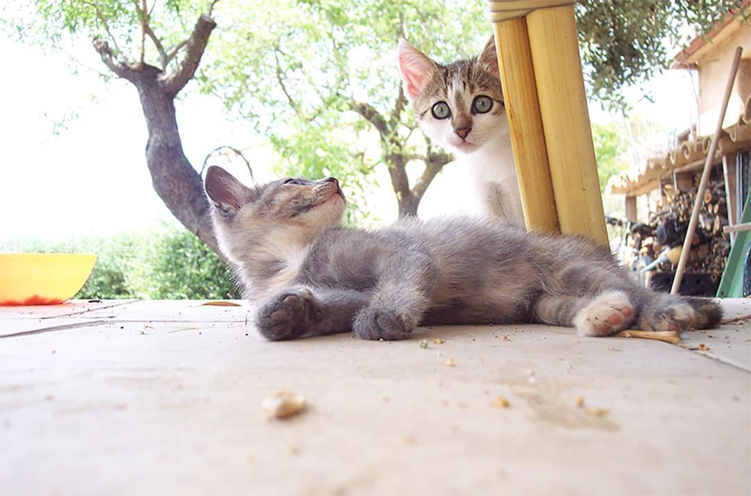 Kittens Staring At Fince