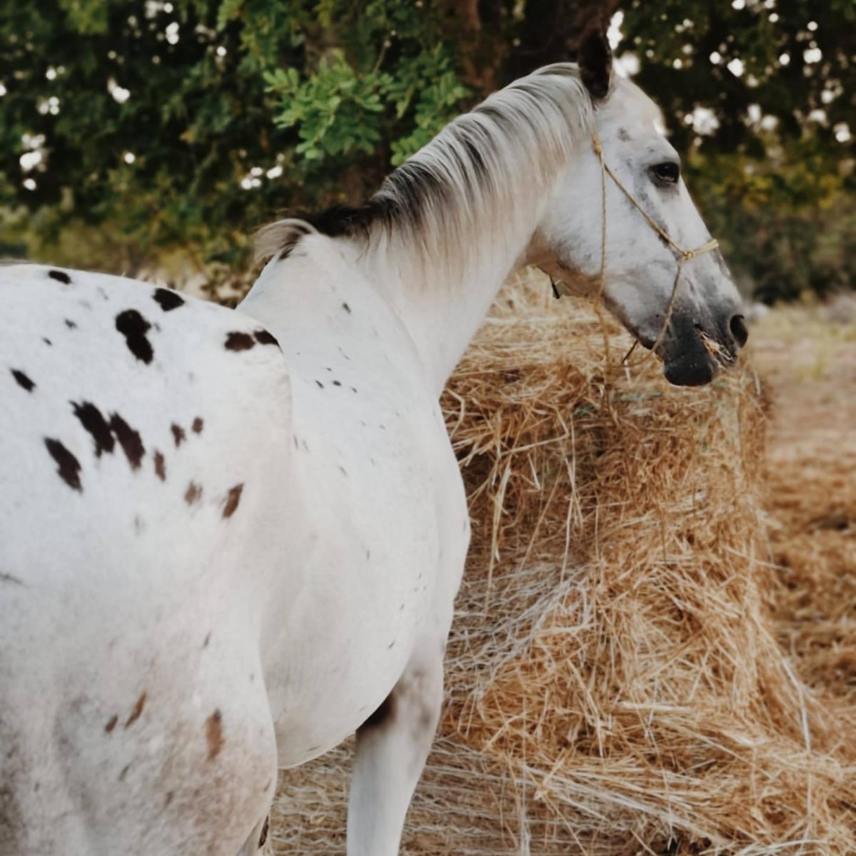 Lizzie horse 7