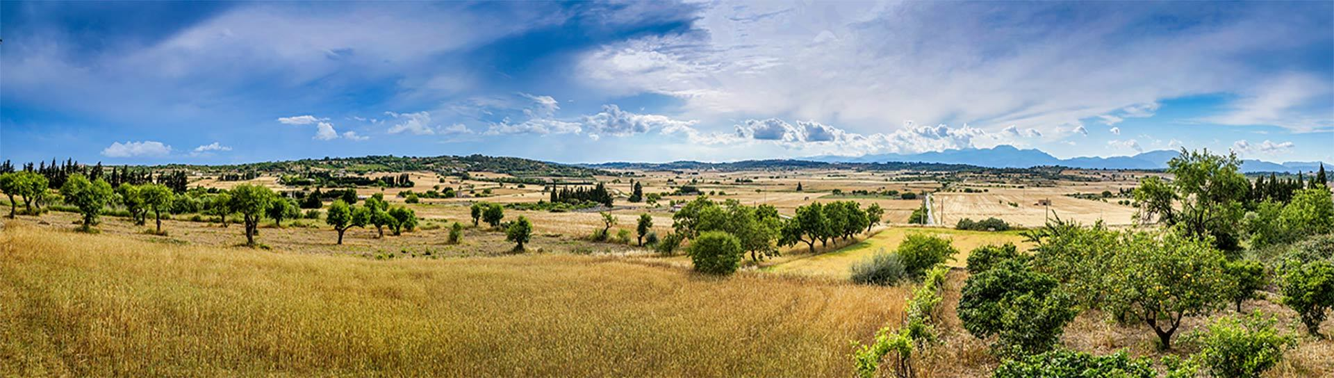 Manacor Farmland Panoramic View