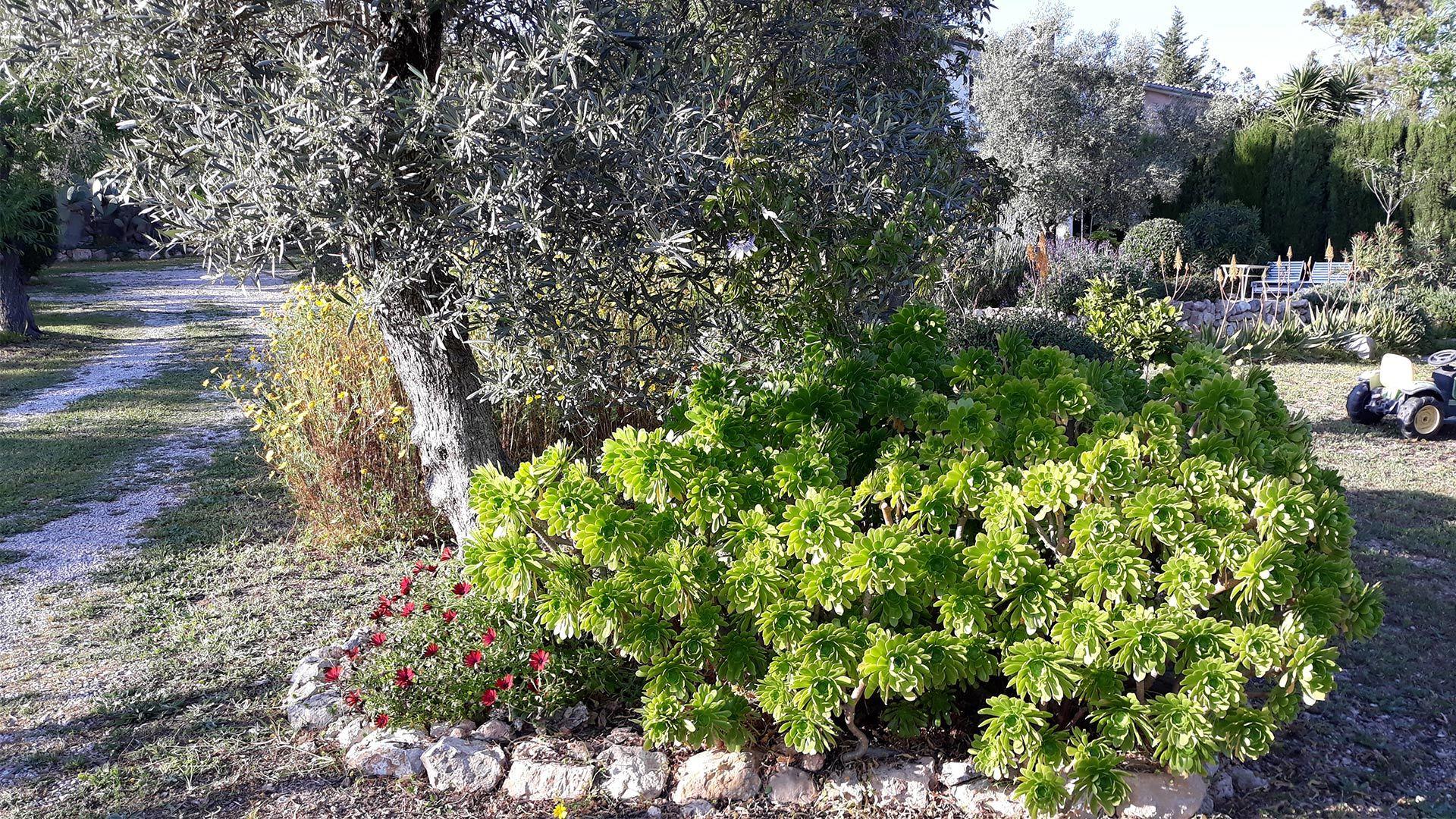 Mediterranean Garden Ulla Cactus min