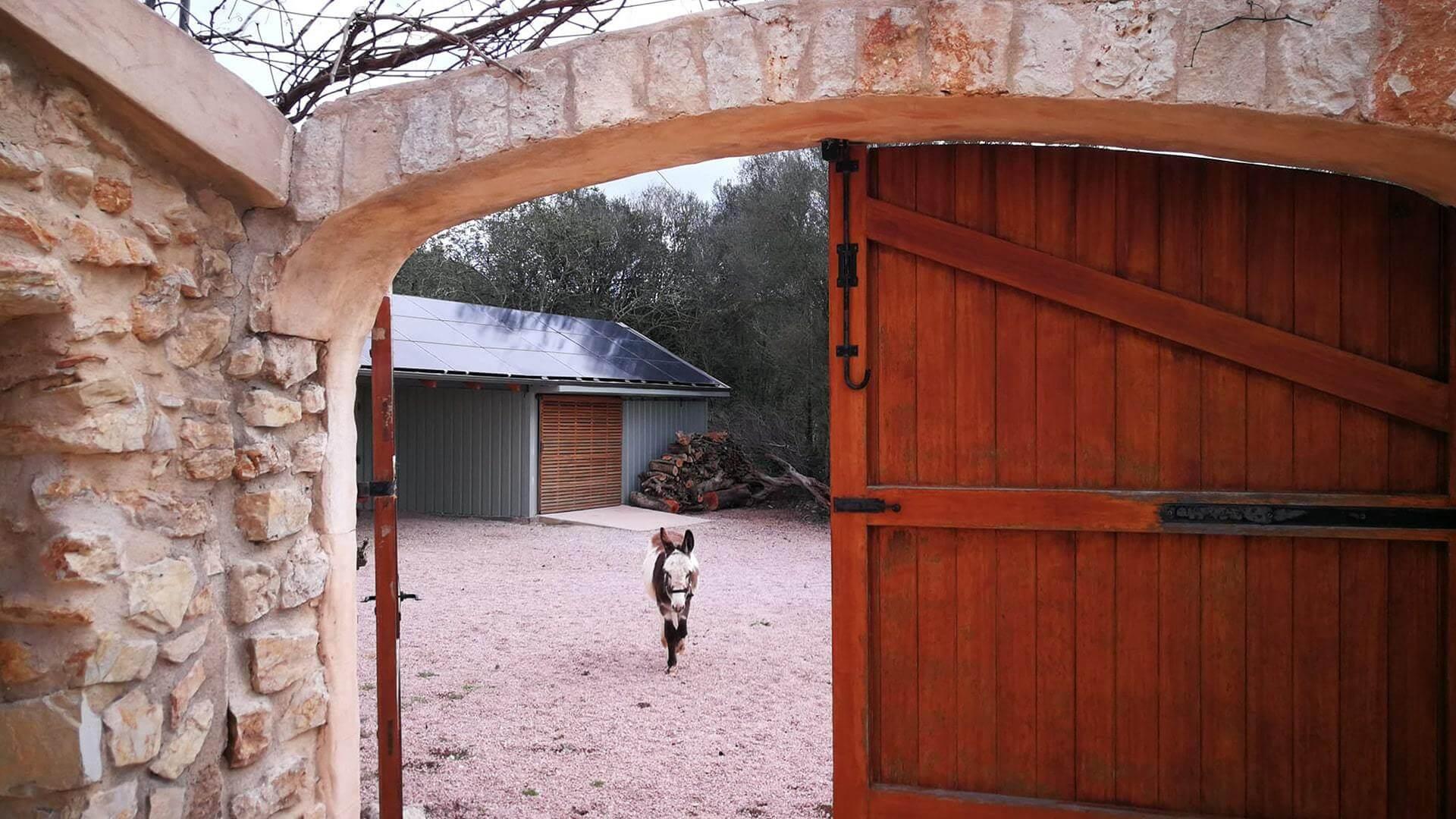 Solysia solar pannels Mallorca donkey min