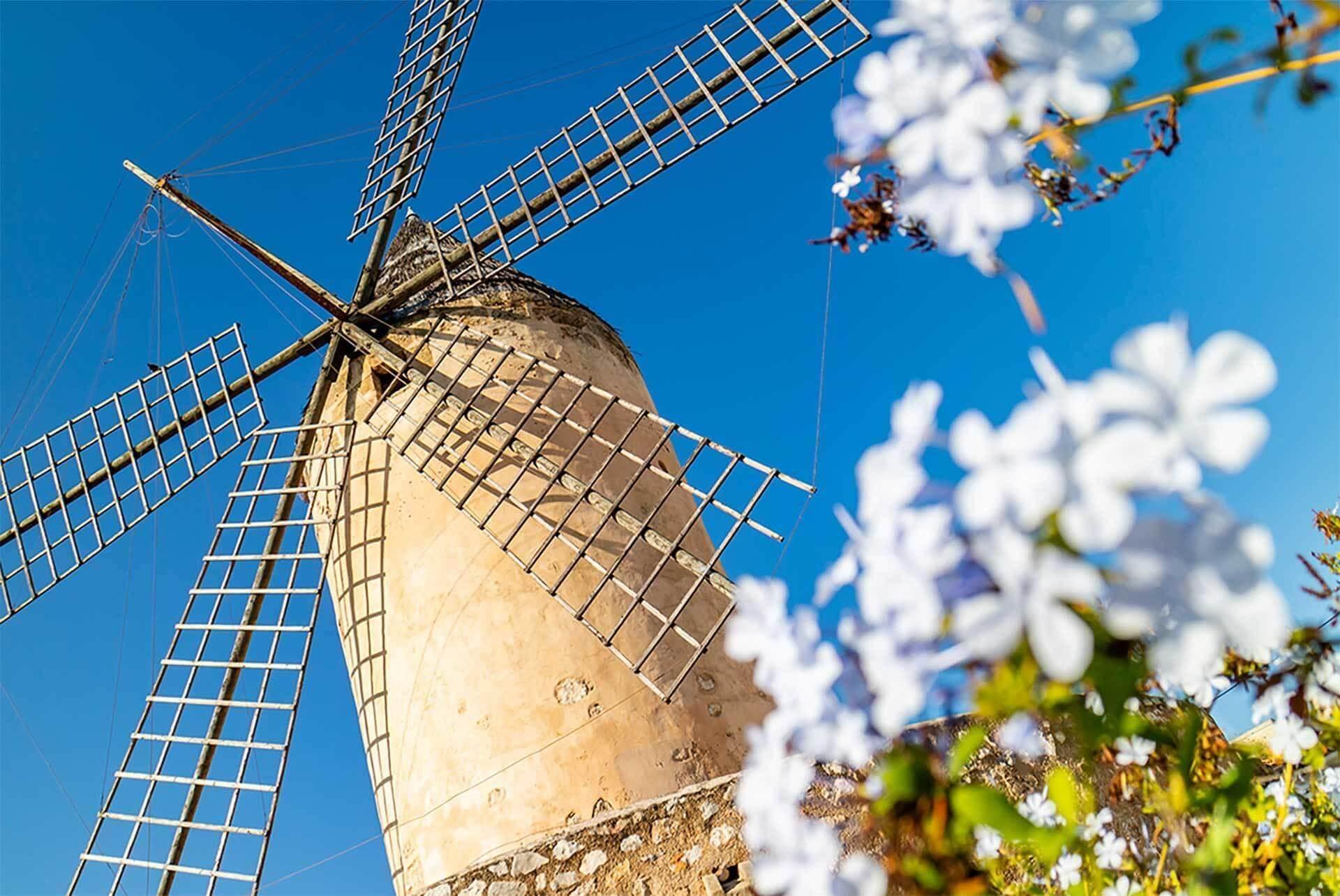 Windmill Flowers Spring Mallorca Santa Catalina