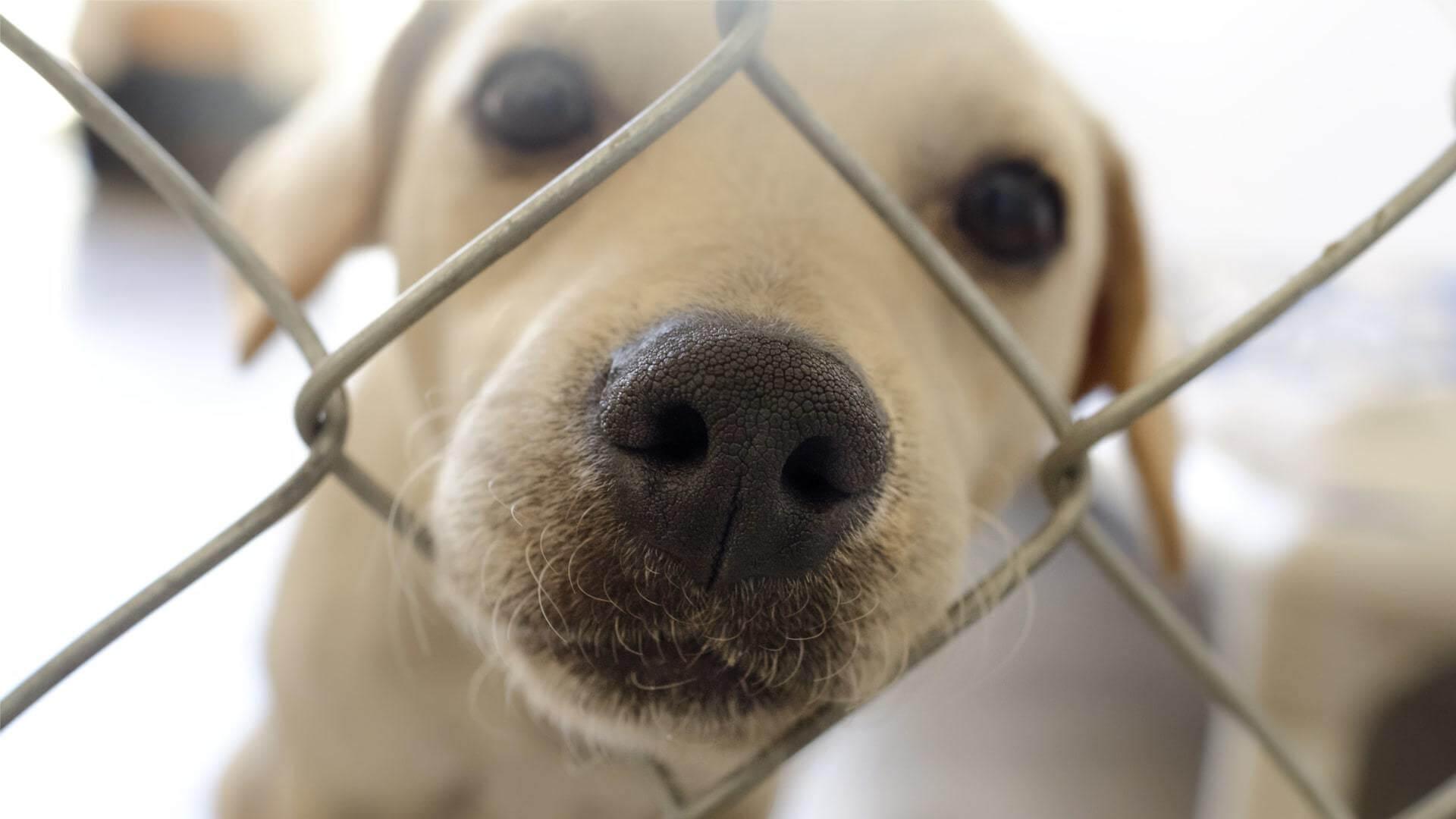 Dog shelter mallorca min