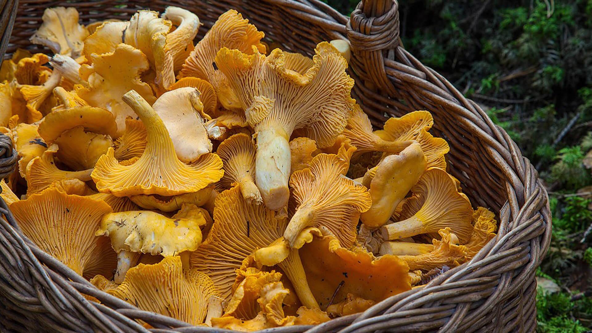 Fungus mushroom autumn mallorca
