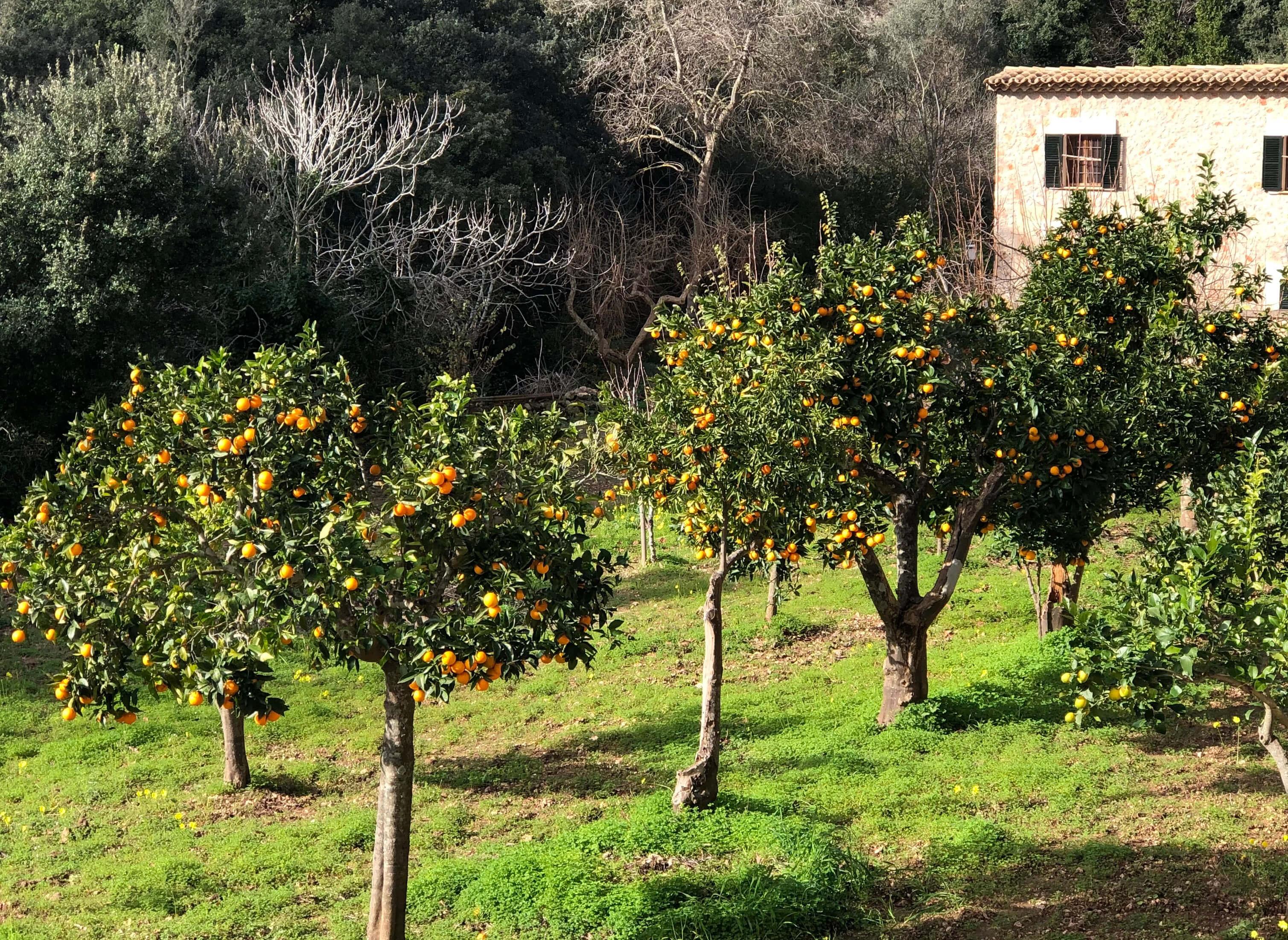 Hike Santa Maria To Orient Mallorca Img 3467