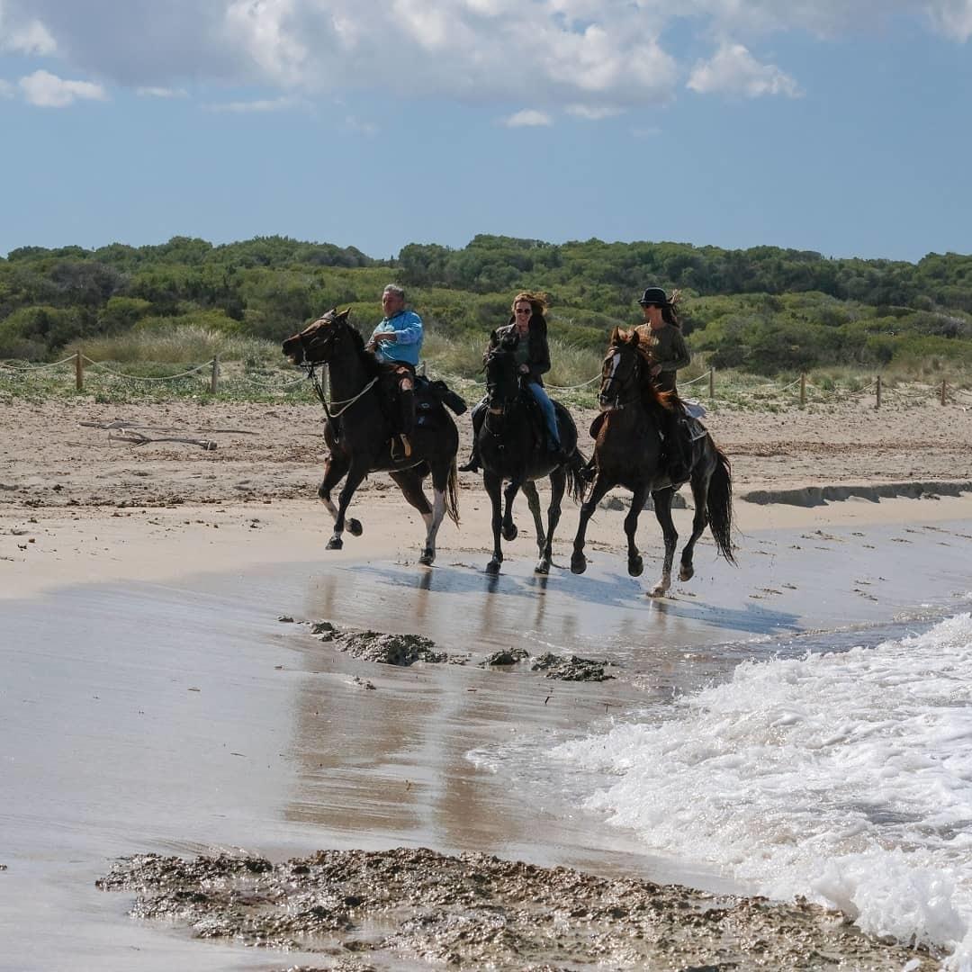 Horses on beach in mallorca