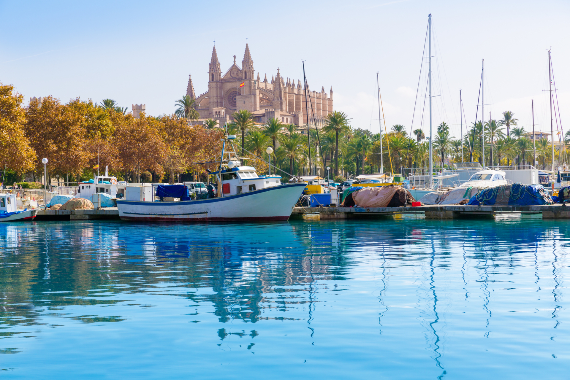 view palma cathedral from the port