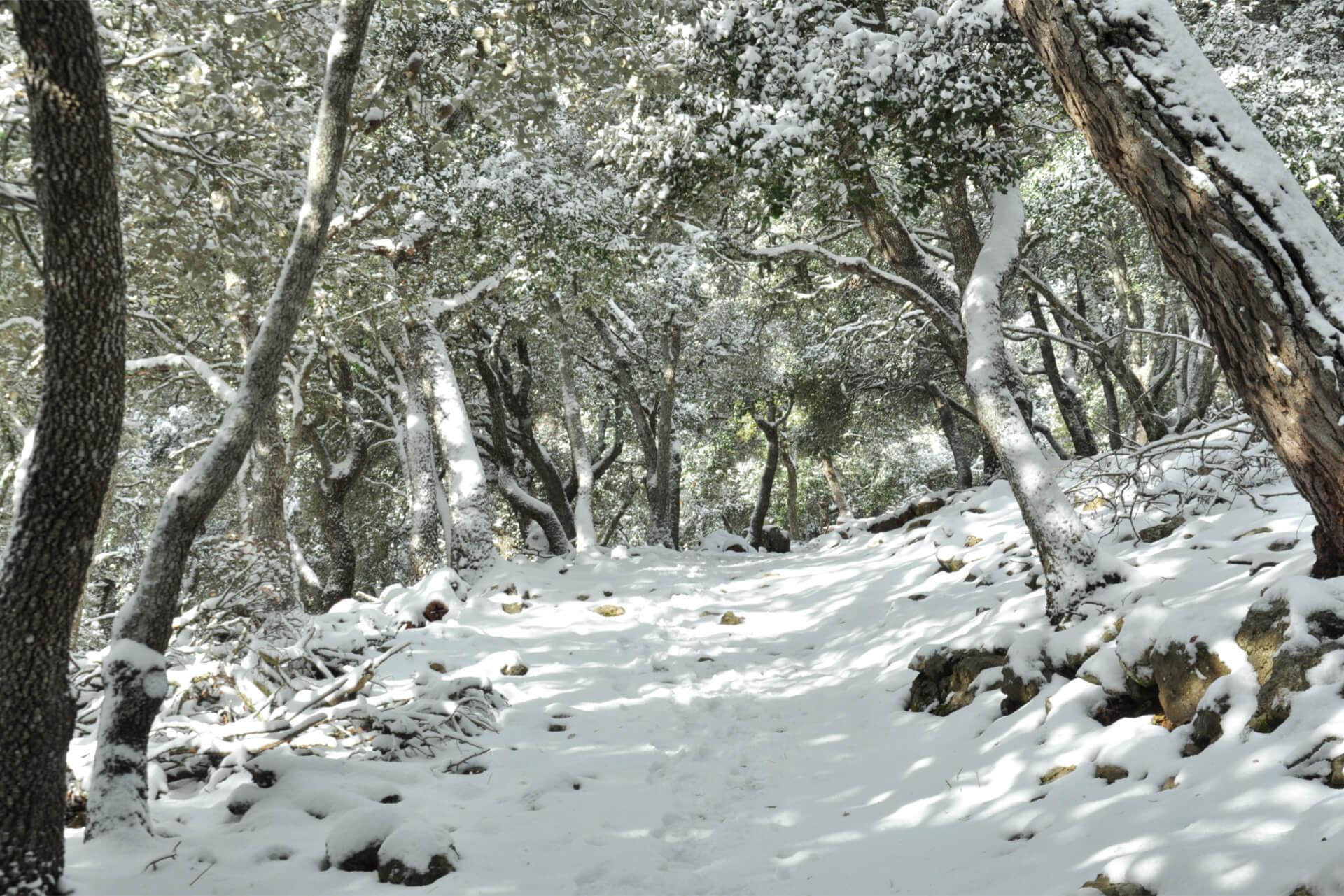 snow mallorca