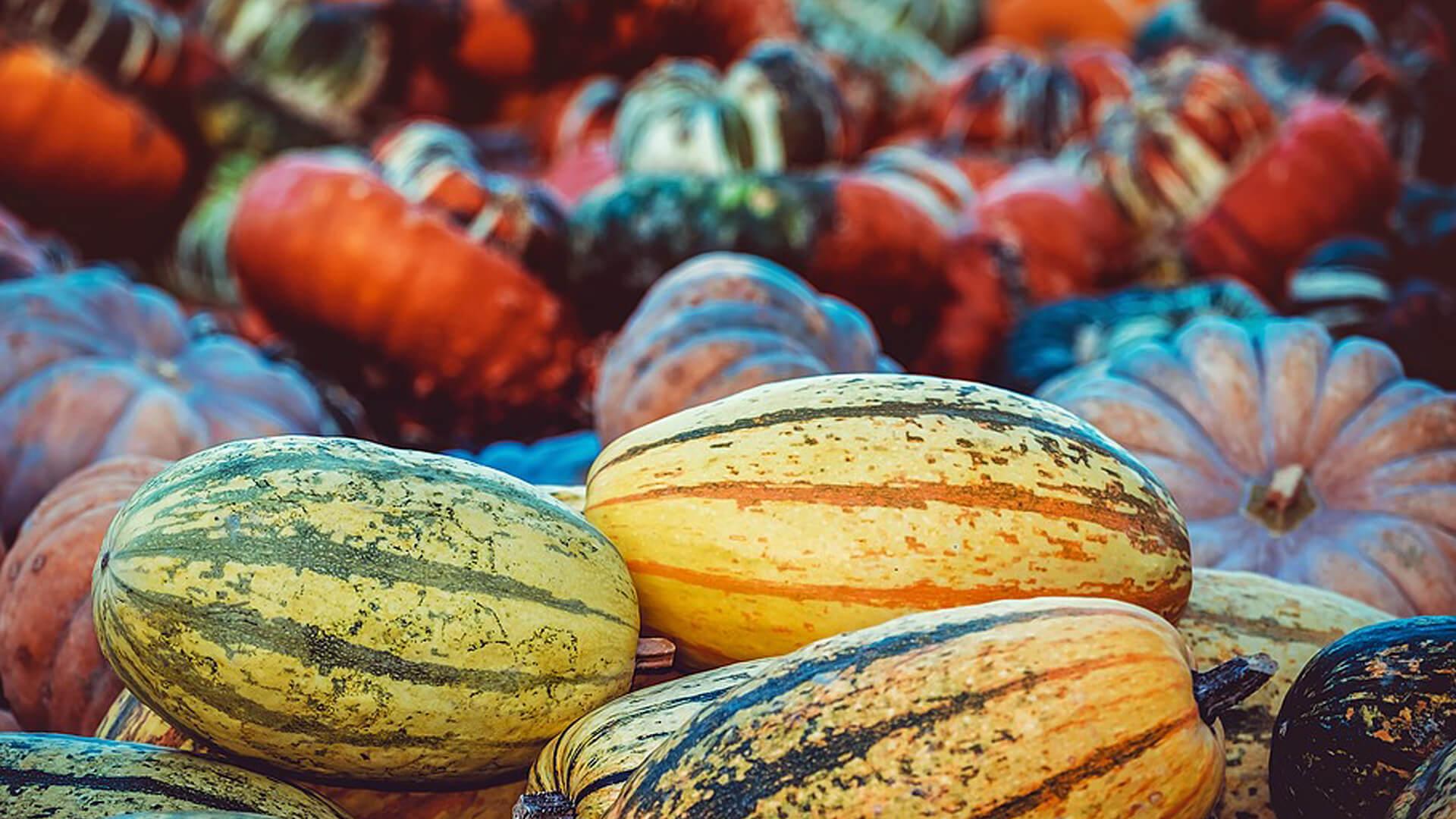 Squash yummy autumn mallorca