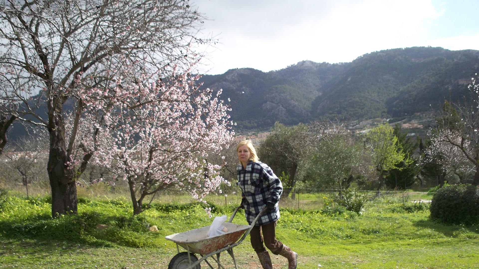 Woman gardenning almond tree blossom Mallorca by Ulla min